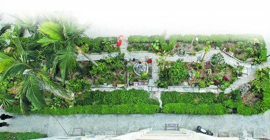 ps绿化带植物平面素材